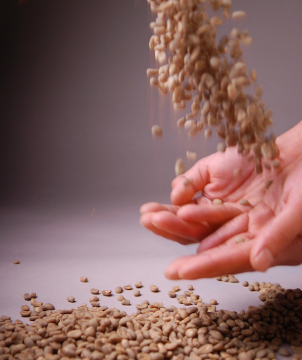 Gayo Highlands Arabica Green Beans 5kgs